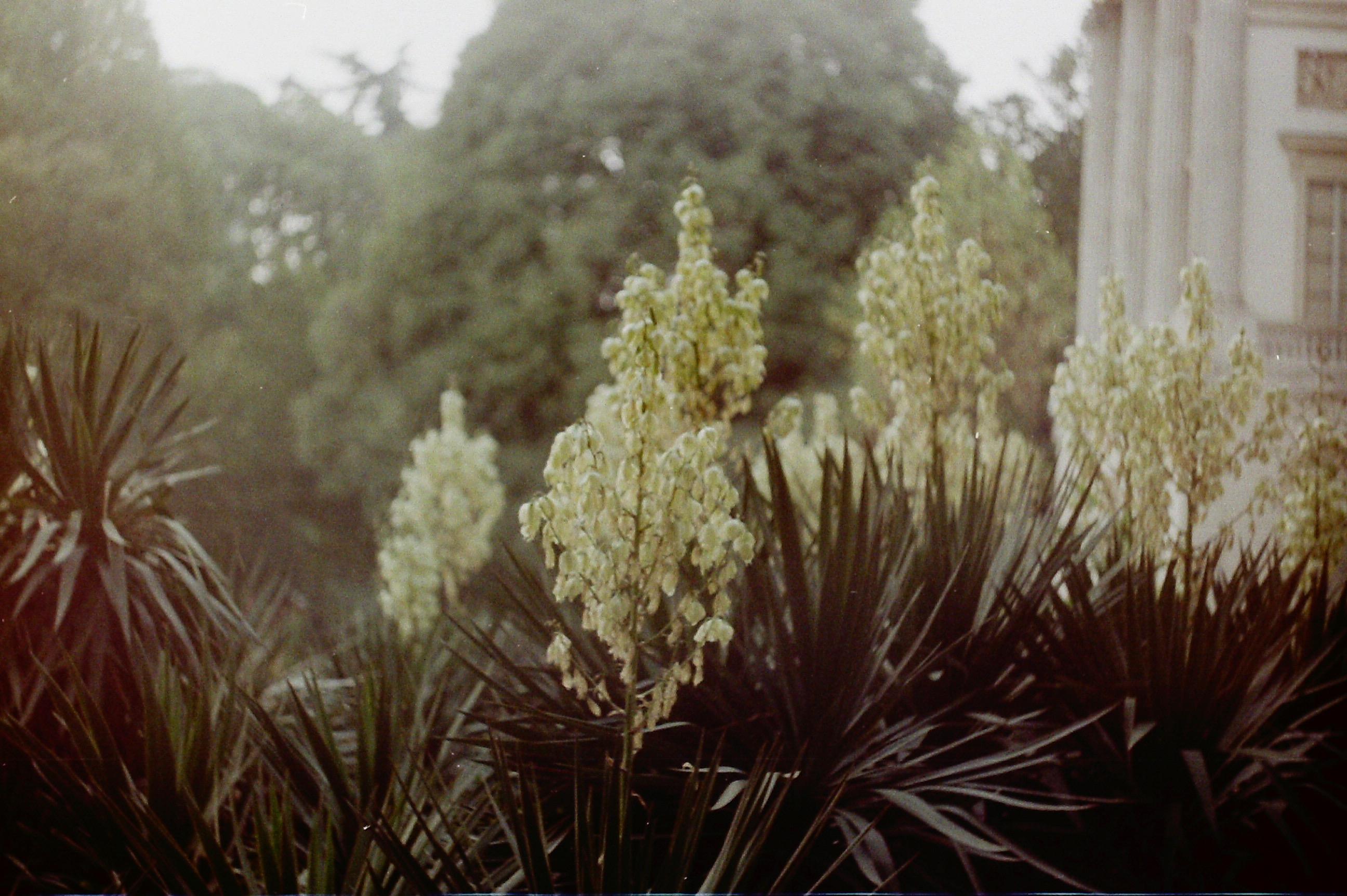 fiori milano
